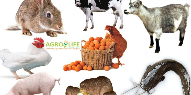 ALL ANIMALS FEED/CONCENTRATES FORMULATION SOFTWARE